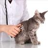 Ветеринарные клиники в Ленинск-Кузнецком